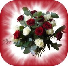 bouquet-de-fleurs-roses-rouges-et-roses-blanches1