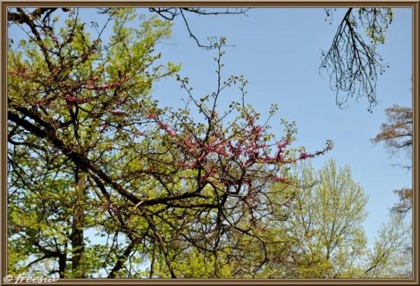 Bordeaux - Jardin-Public ses arbres et ses chemins.