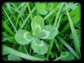 trefle-4-feuilles-1