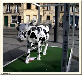 vache noir et blanche