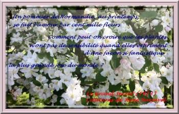 pommier-en-fleurs-en-normandie-2-1024x764