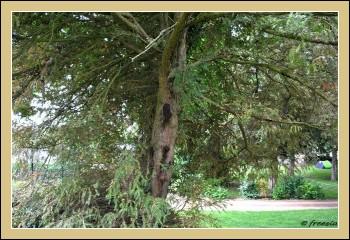 Etrange et très bel arbre