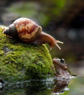 tout-a-commence-quand-la-grenouille-a-sorti-la-tete-de-l-eau-et-est-tombee-nez-a-nez-avec-cet-escargot_56971_w460