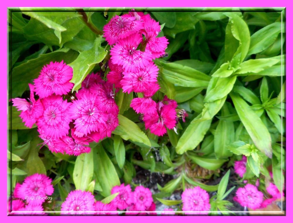 Photos - 11-09-2015 - Fleurs à l'arrêt du bus (3/5)