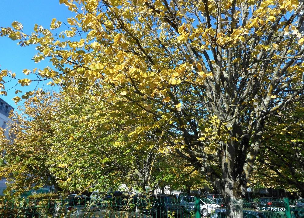 Premières photos d'automne (2/4)