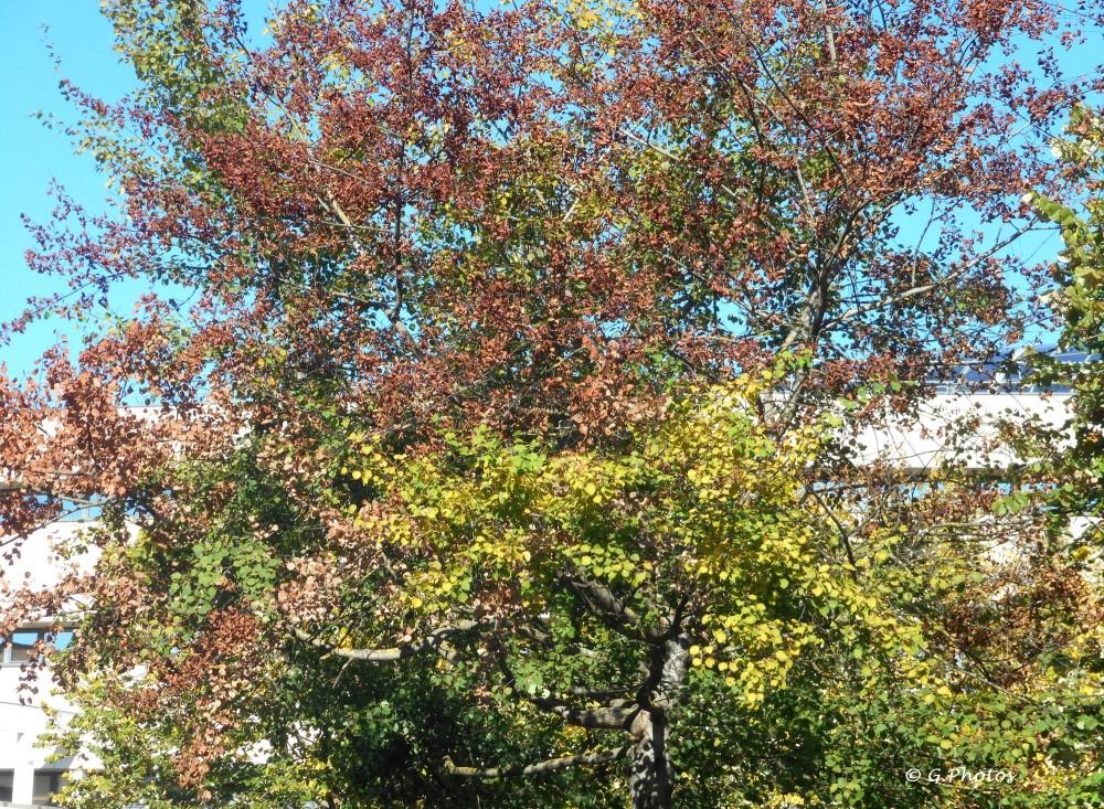 Premières photos d'automne (4/4)